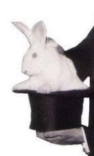 Rabbit_Hat_Sized